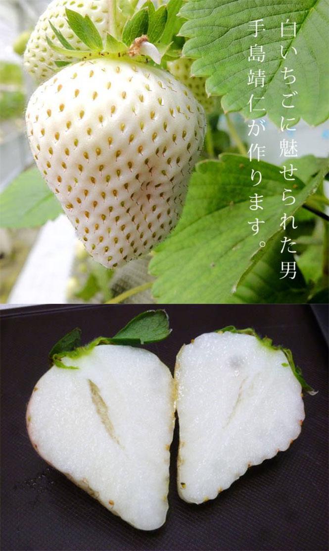 Λευκές φράουλες   Φωτογραφία της ημέρας