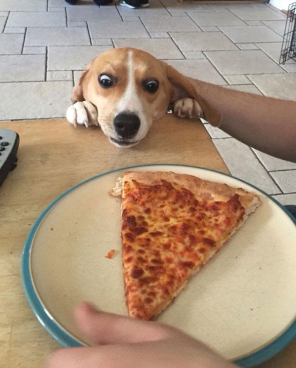 Η έκφραση μου όποτε βλέπω πίτσα   Φωτογραφία της ημέρας