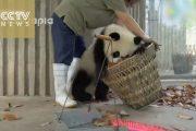 Πως δυο παιχνιδιάρικα Panda μπορούν να οδηγήσουν μια καθαρίστρια στην τρέλα