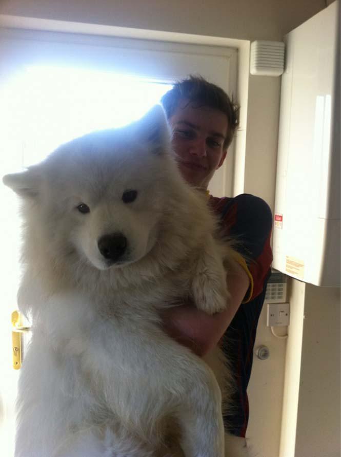Τεράστιοι σκύλοι που δεν νοιάζονται για το μέγεθος τους (4)
