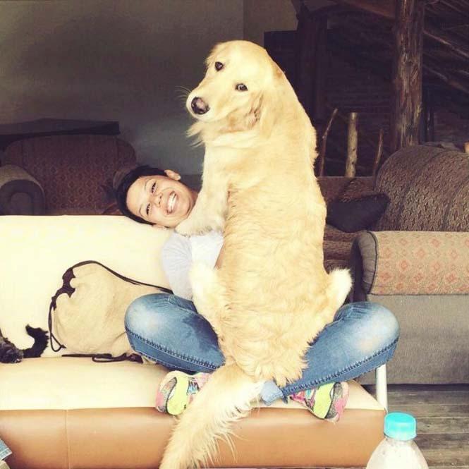 Τεράστιοι σκύλοι που δεν νοιάζονται για το μέγεθος τους (11)