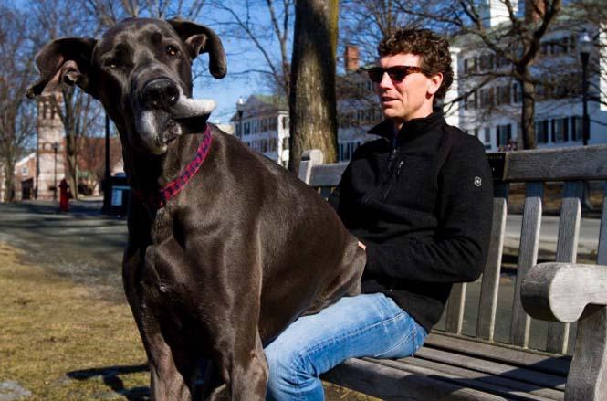 Τεράστιοι σκύλοι που δεν νοιάζονται για το μέγεθος τους (15)