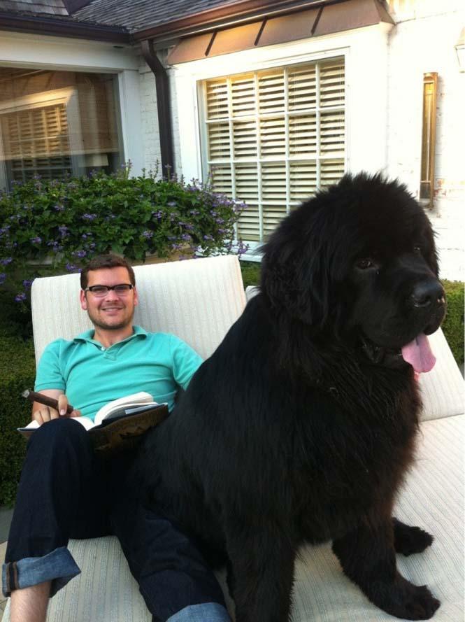 Τεράστιοι σκύλοι που δεν νοιάζονται για το μέγεθος τους (16)
