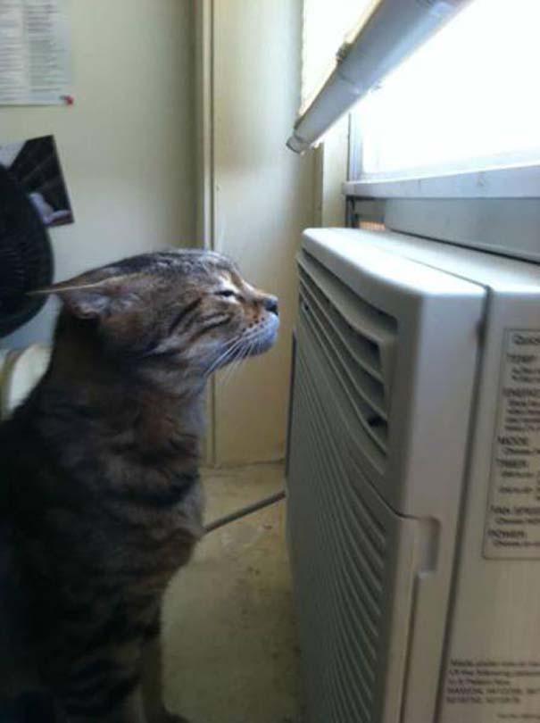Η ζέστη έρχεται... και φέρνει περίεργα και ξεκαρδιστικά σκηνικά! (26)
