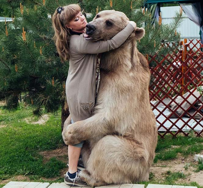 Ζευγάρι από την Ρωσία ζει με μια αρκούδα εδώ και 23 χρόνια (3)