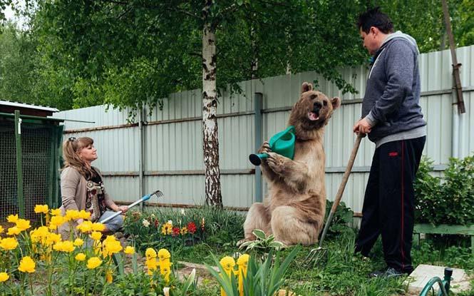 Ζευγάρι από την Ρωσία ζει με μια αρκούδα εδώ και 23 χρόνια (8)