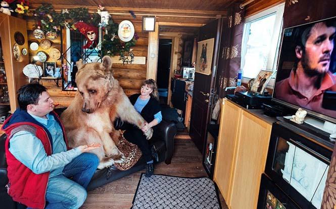 Ζευγάρι από την Ρωσία ζει με μια αρκούδα εδώ και 23 χρόνια (10)