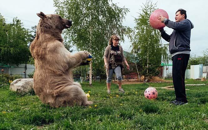 Ζευγάρι από την Ρωσία ζει με μια αρκούδα εδώ και 23 χρόνια (11)
