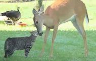 23 απρόσμενες φιλίες στο ζωικό βασίλειο
