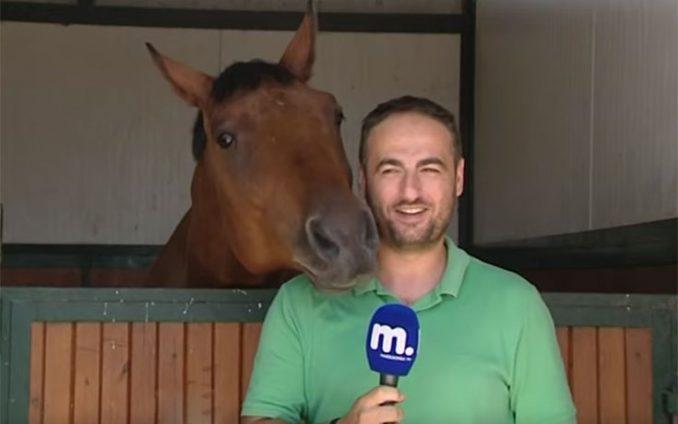Άλογο δεν μπορεί να αντισταθεί σε Έλληνα ρεπόρτερ