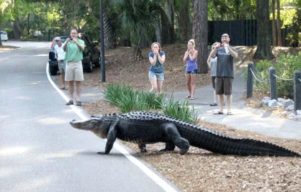 Αυτά τα βλέπεις μόνο στην Florida (4)