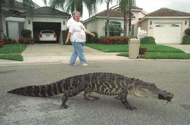 Αυτά τα βλέπεις μόνο στην Florida (5)