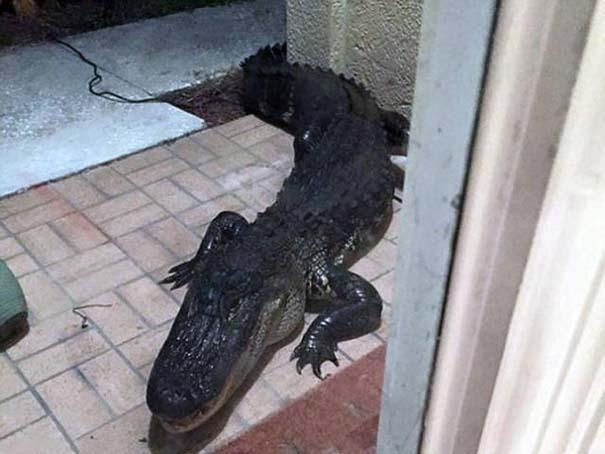 Αυτά τα βλέπεις μόνο στην Florida (15)