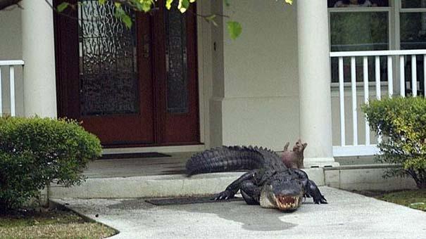 Αυτά τα βλέπεις μόνο στην Florida (16)