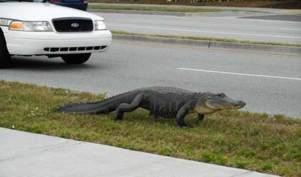 Αυτά τα βλέπεις μόνο στην Florida (17)