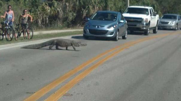 Αυτά τα βλέπεις μόνο στην Florida (18)