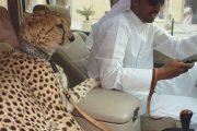 Στο Dubai μπορείς να συναντήσεις κυριολεκτικά τα πάντα... #2 (9)
