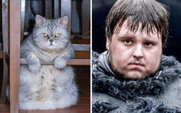 Γάτες που έχουν εκπληκτική ομοιότητα με διάσημα πρόσωπα (3)
