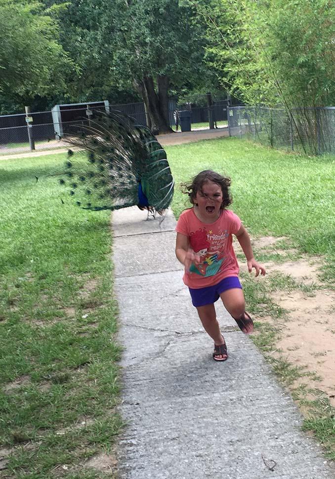 Κοριτσάκι τρέχει να γλυτώσει από παγόνι και οι ειδικοί του Photoshop αναλαμβάνουν δράση (2)