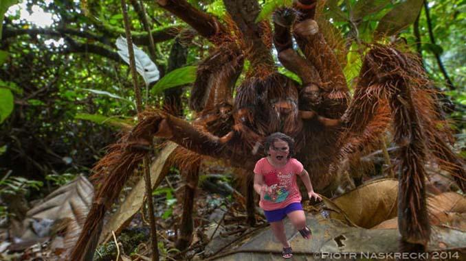 Κοριτσάκι τρέχει να γλυτώσει από παγόνι και οι ειδικοί του Photoshop αναλαμβάνουν δράση (14)