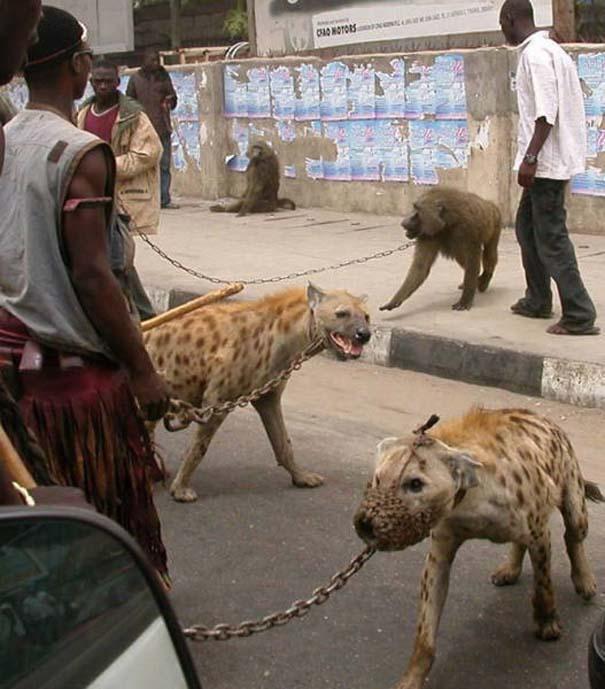 Μόνο στην Αφρική #4 (3)