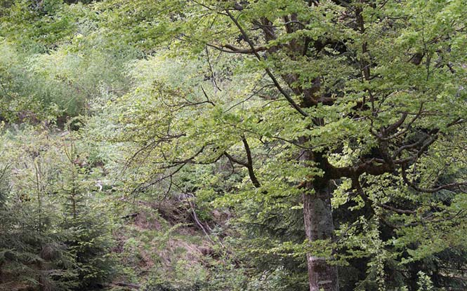 Μπορείτε να εντοπίσετε την αρκούδα μέσα στο δάσος; (1)