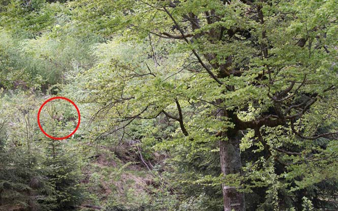 Μπορείτε να εντοπίσετε την αρκούδα μέσα στο δάσος; (2)