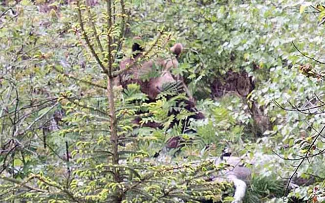 Μπορείτε να εντοπίσετε την αρκούδα μέσα στο δάσος; (3)