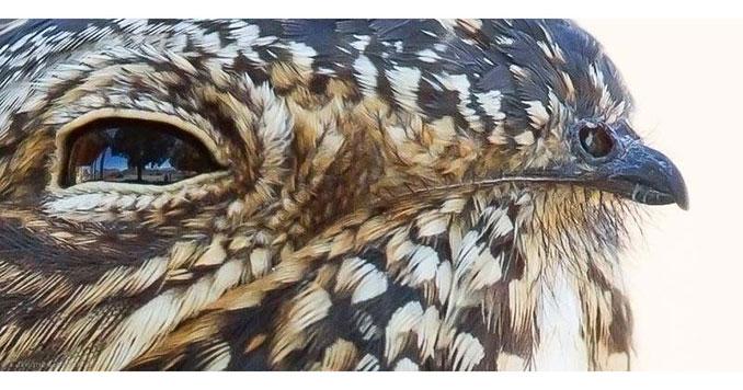 Το ράμφος αυτού του πτηνού μοιάζει με δεύτερο πτηνό   Φωτογραφία της ημέρας