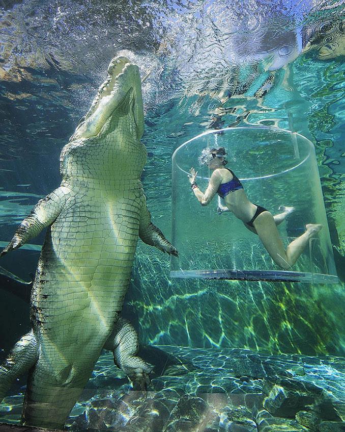 Κολυμπώντας με ένα θηρίο μήκους 5 μέτρων | Φωτογραφία της ημέρας