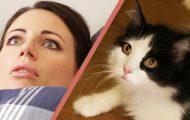 10 σημάδια που δείχνουν πως η γάτα σου κάνει κουμάντο στο σπίτι