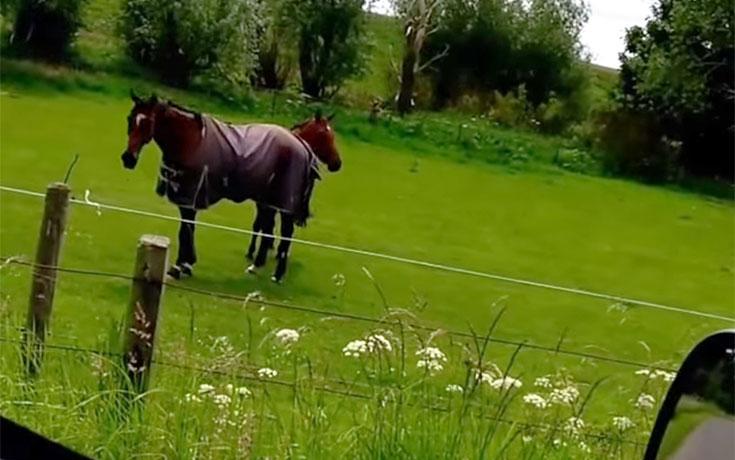 Δείτε πως κάνει αυτό το άλογο όταν ακούει Heavy Metal