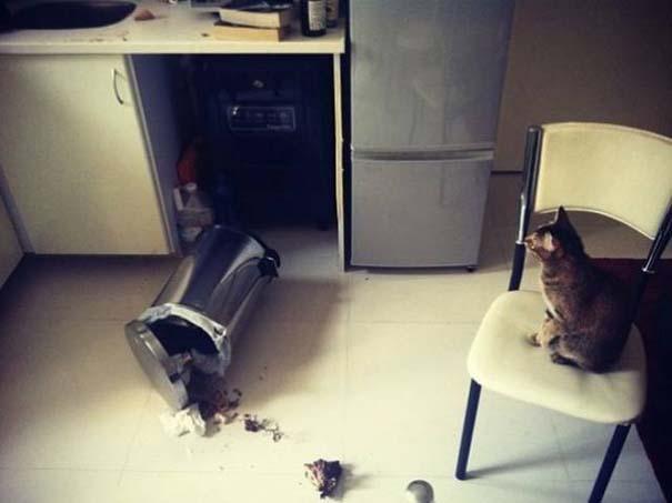 19 ένοχα κατοικίδια ποζάρουν δίπλα στο καταστροφικό τους έργο (10)