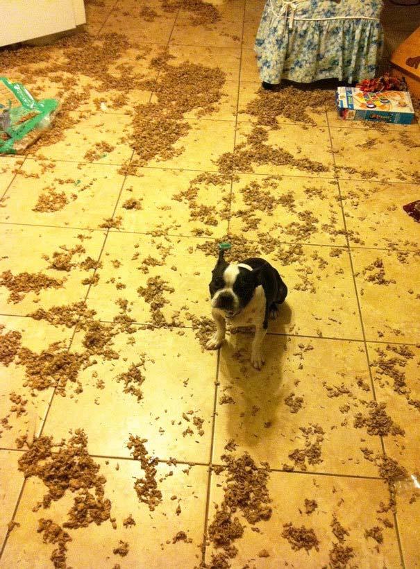 20 φορές που ο σκύλος ήταν ο... «χειρότερος» φίλος του ανθρώπου (17)