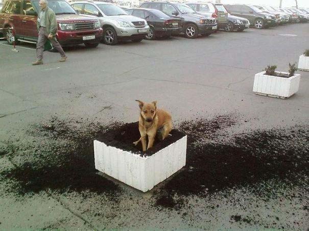 20 φορές που ο σκύλος ήταν ο... «χειρότερος» φίλος του ανθρώπου (16)