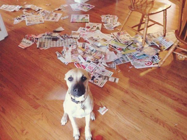 20 φορές που ο σκύλος ήταν ο... «χειρότερος» φίλος του ανθρώπου (15)
