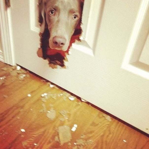 20 φορές που ο σκύλος ήταν ο... «χειρότερος» φίλος του ανθρώπου (2)