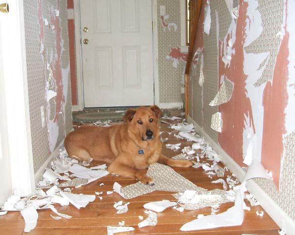 20 φορές που ο σκύλος ήταν ο... «χειρότερος» φίλος του ανθρώπου (1)