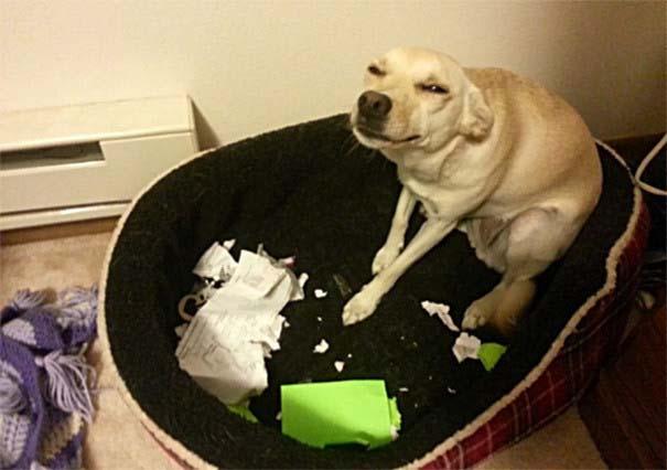 20 φορές που ο σκύλος ήταν ο... «χειρότερος» φίλος του ανθρώπου (5)