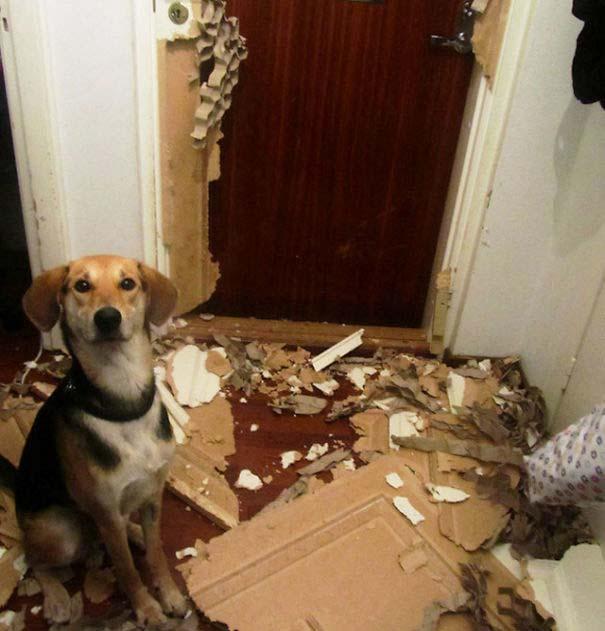 20 φορές που ο σκύλος ήταν ο... «χειρότερος» φίλος του ανθρώπου (19)