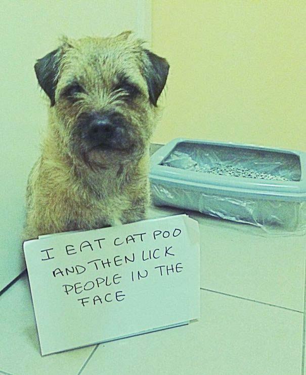 20 φορές που ο σκύλος ήταν ο... «χειρότερος» φίλος του ανθρώπου (6)