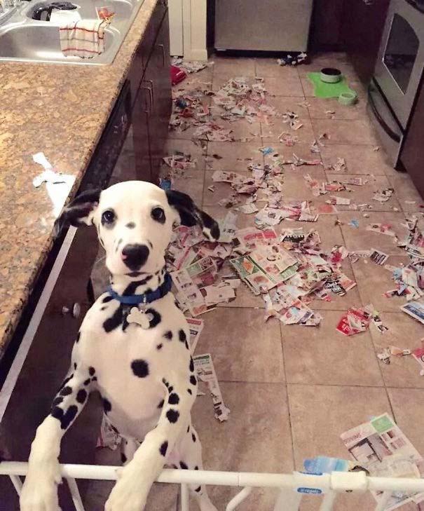 20 φορές που ο σκύλος ήταν ο... «χειρότερος» φίλος του ανθρώπου (20)