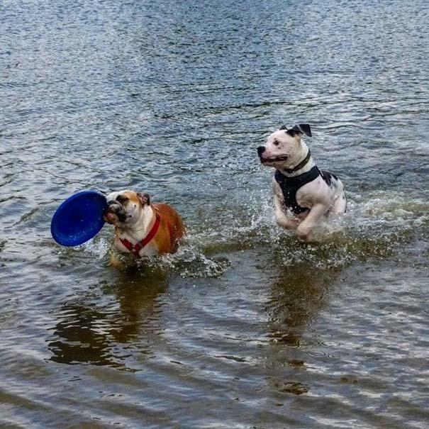 Φωτογραφίες σκύλων που απολαμβάνουν το καλοκαίρι τους (1)