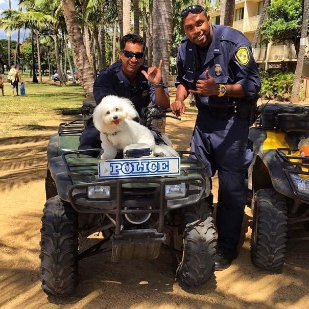 Φωτογραφίες σκύλων που απολαμβάνουν το καλοκαίρι τους (2)