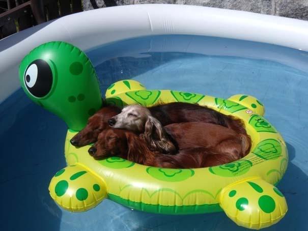 Φωτογραφίες σκύλων που απολαμβάνουν το καλοκαίρι τους (3)