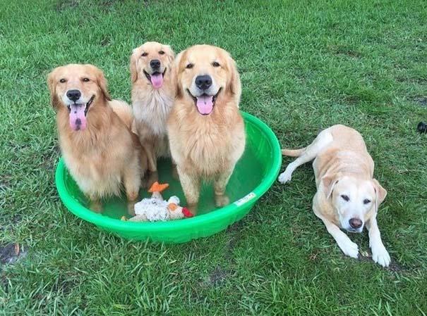 Φωτογραφίες σκύλων που απολαμβάνουν το καλοκαίρι τους (6)