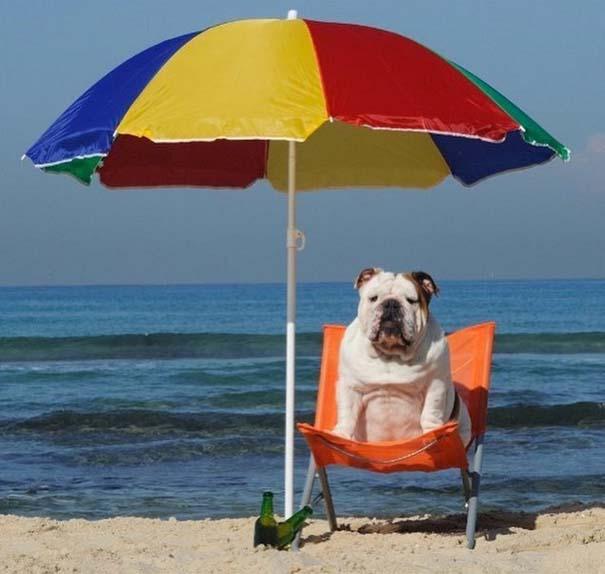Φωτογραφίες σκύλων που απολαμβάνουν το καλοκαίρι τους (7)