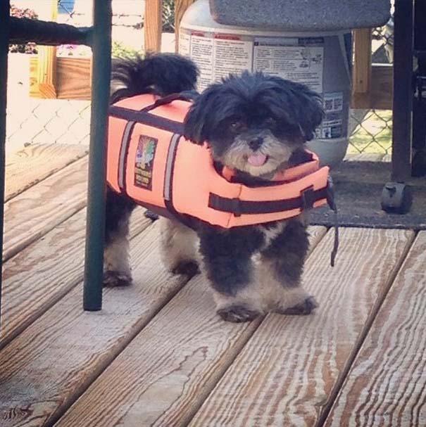 Φωτογραφίες σκύλων που απολαμβάνουν το καλοκαίρι τους (8)
