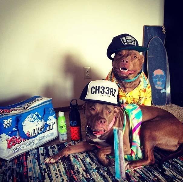 Φωτογραφίες σκύλων που απολαμβάνουν το καλοκαίρι τους (9)