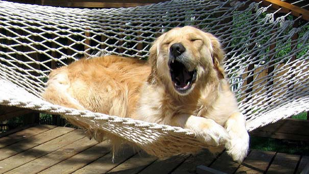 Φωτογραφίες σκύλων που απολαμβάνουν το καλοκαίρι τους (10)